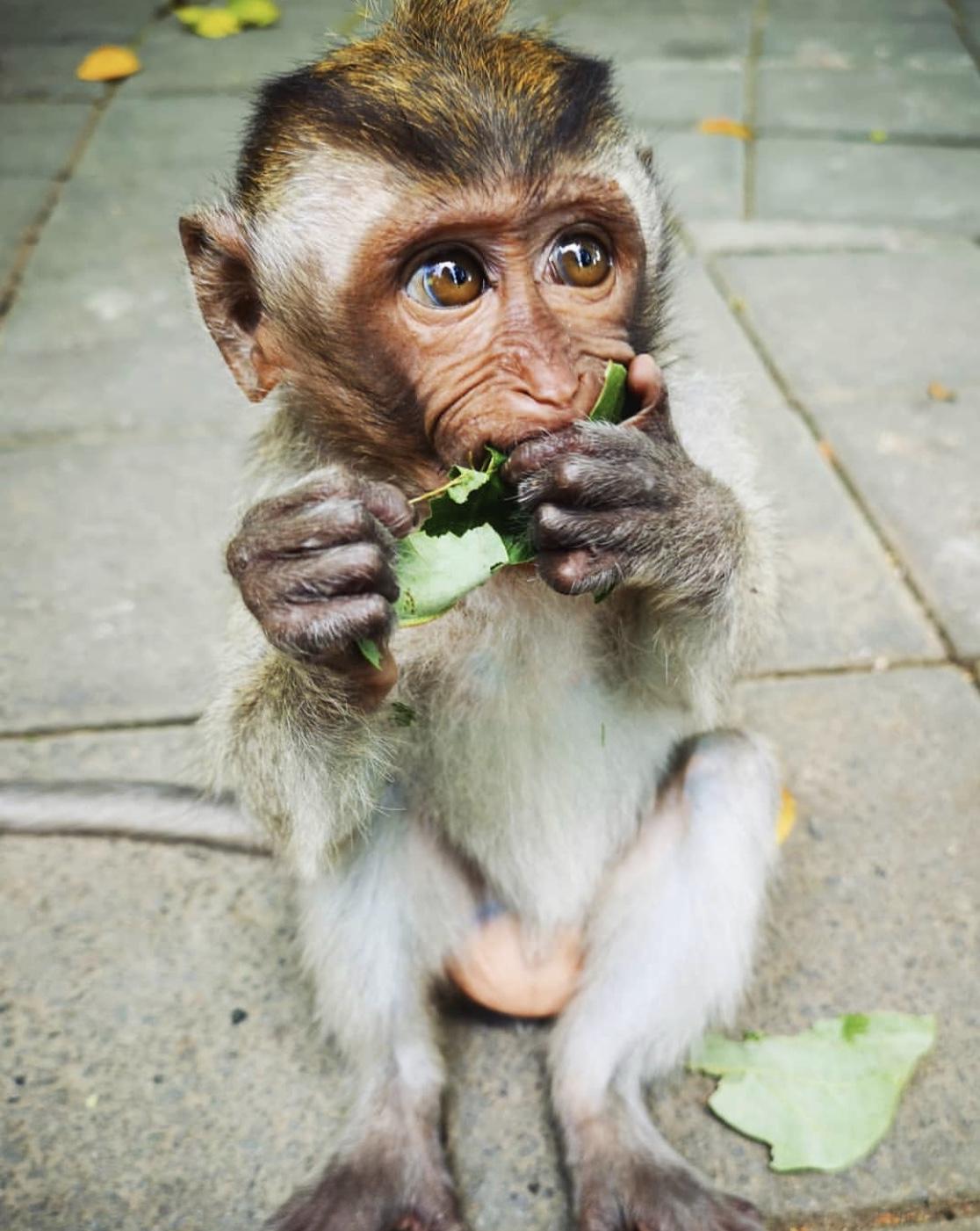 Baby monkey in Bali