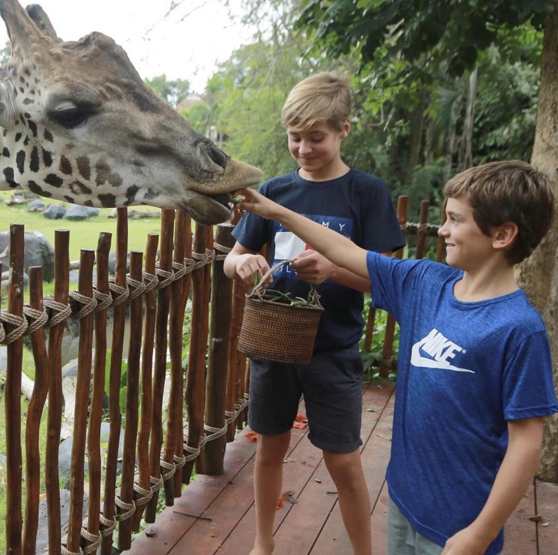tween boy feeding giraffe