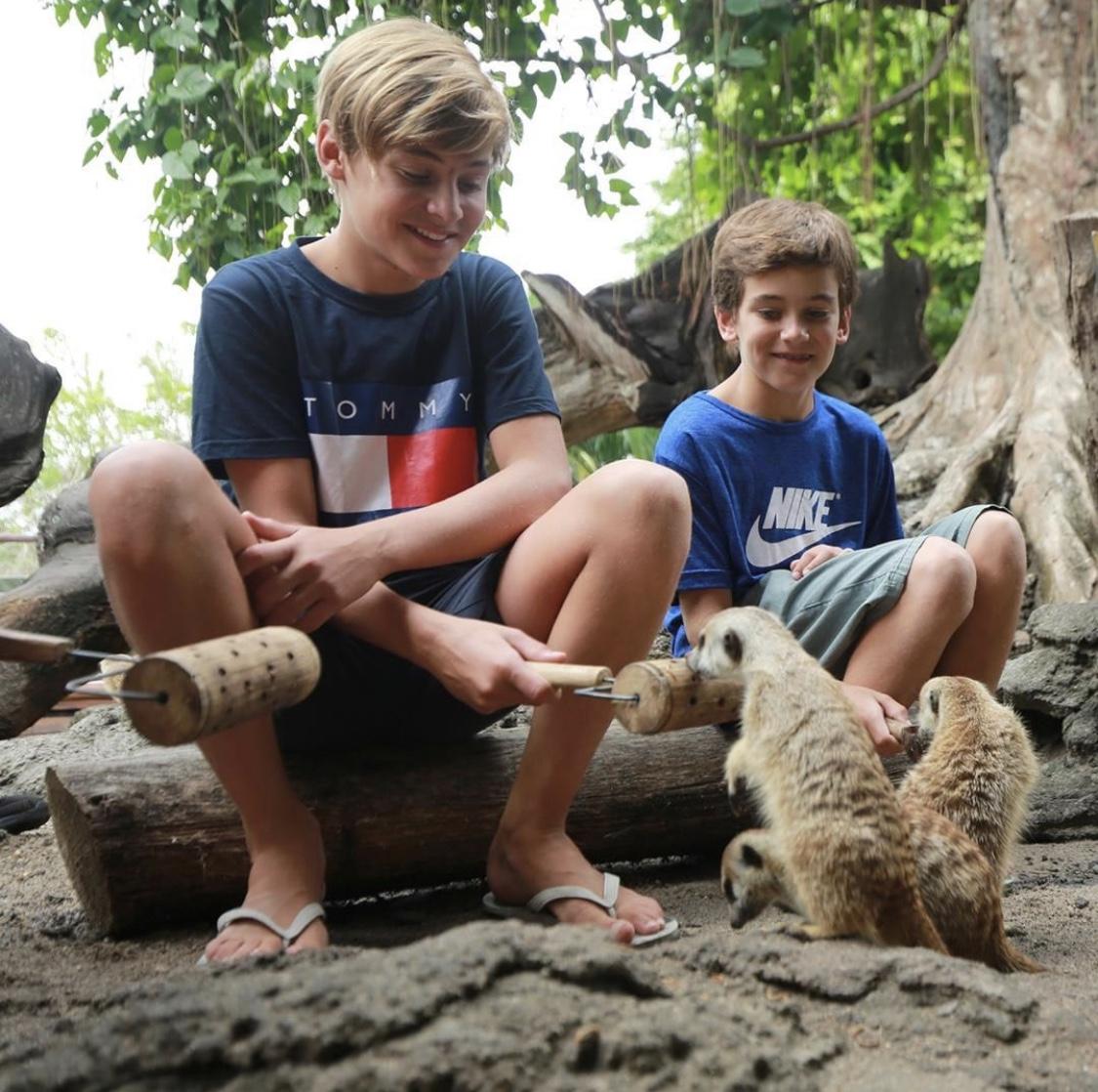 boys feeding meerkats