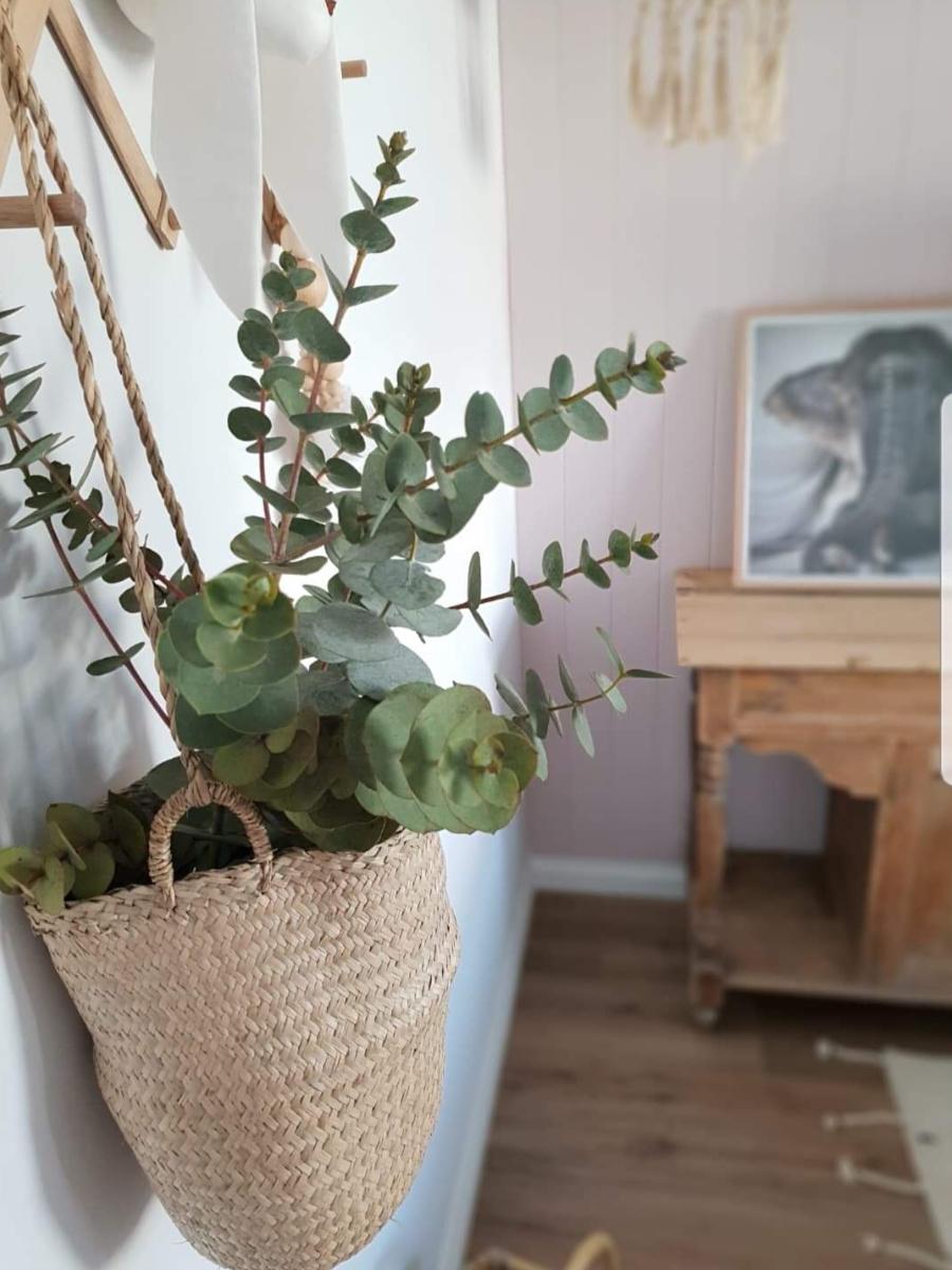 tween bedroom ideas - indoor hanging plant